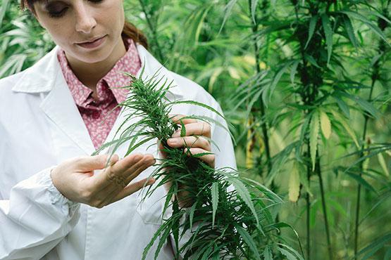 Medicinal cannabis harm reduction