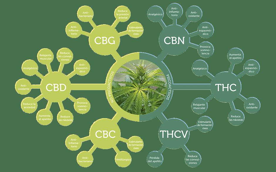 Efectos terapéuticos de los cannabinoides